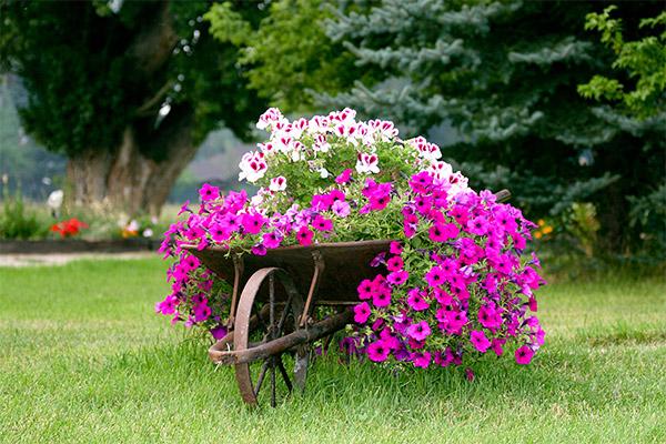 Reparti centroverde for Piante e fiori